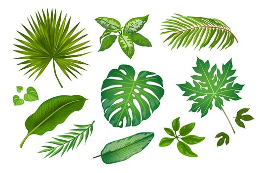 Tropic leaves in cartoon style illustration set