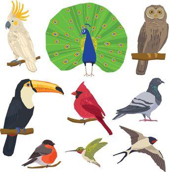 Bird Drawn Icon Set
