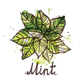 Sketch Mint Leaf