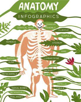 Skeleton Anatomy Infographics