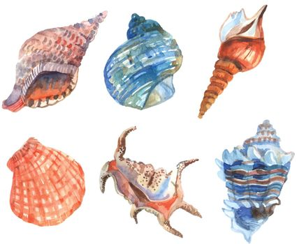 Watercolor Shell Set