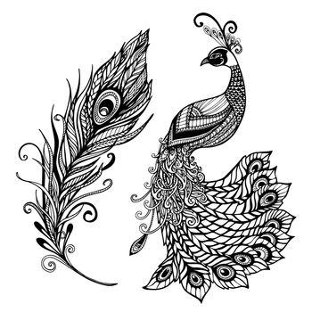 Peacock feather design black doodle  print