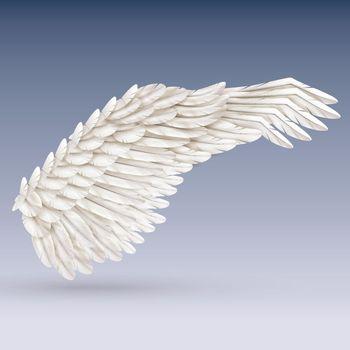 White Bird Wing