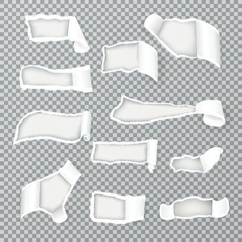 Torn Paper Curls Realistic Transparent
