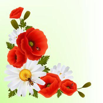 Poppy daisy background
