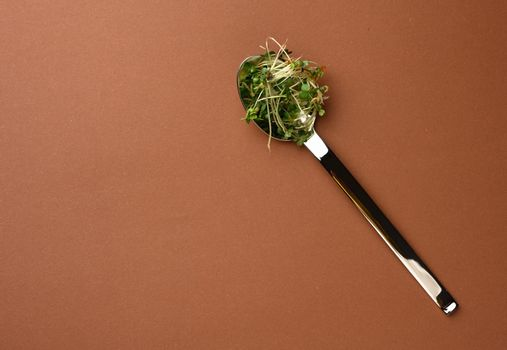 young sprouts of microgreen in a metal spoon on a brown background