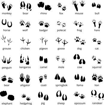 Silhouette Animal Track Set