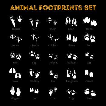 Animal Track Black Background