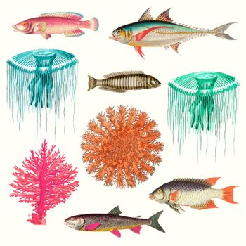Vintage marine life vector illustration set, remixed from public domain artworks