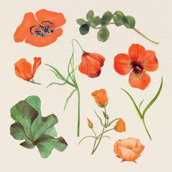 Vintage summer flower name vector illustration set, remixed from public domain artworks