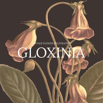 Vintage floral template vector illustration with gloxinia background, remixed from public domain artworks