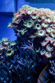 Underwater Image of sea plants and algae in the Sea