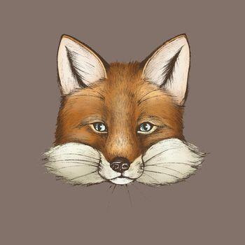 Vintage furry brown fox face vector