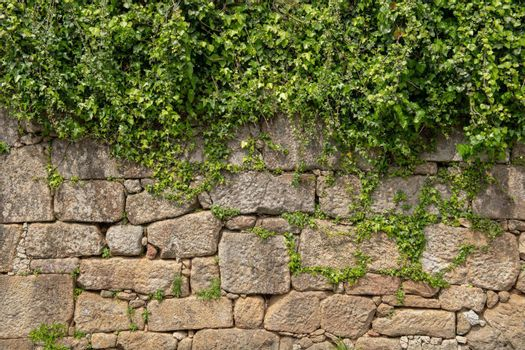 Plant grow on top of wall