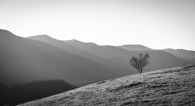 Lonely Tree Growing On Hillside, Grayscale Image