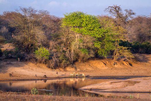 Wildlife landscape in Kruger National park