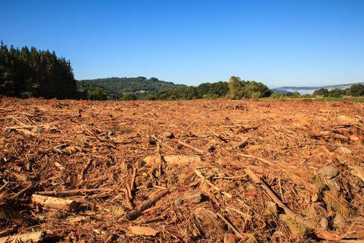 Deforestation in Spain