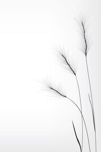 Wheat  composition
