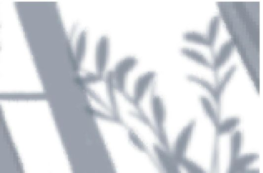 Window Plant Shadow Composition