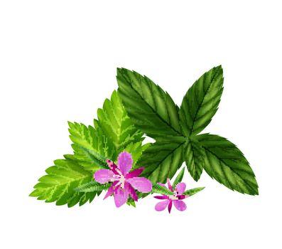 Realistic Herbal Tea Ingredients