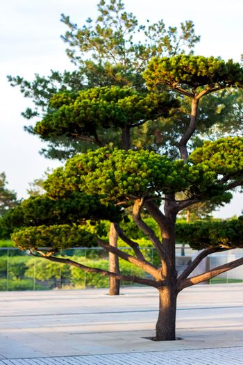 A beautiful tree grows in the park.