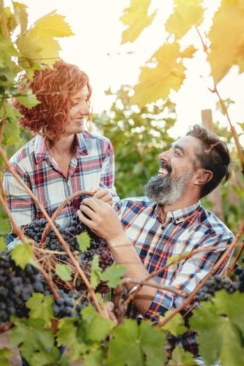 Harvest With Love