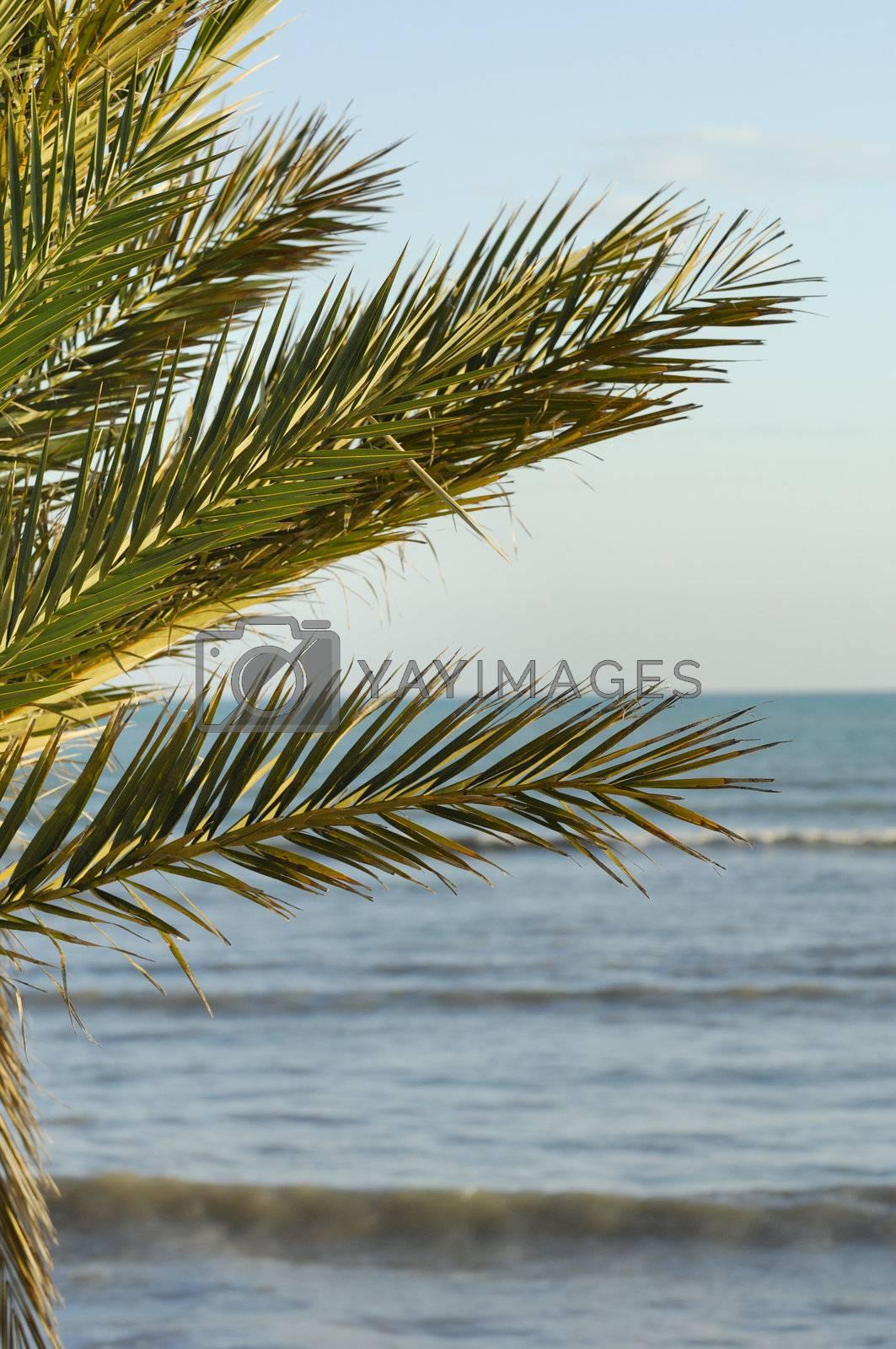 Tunisia by swimnews