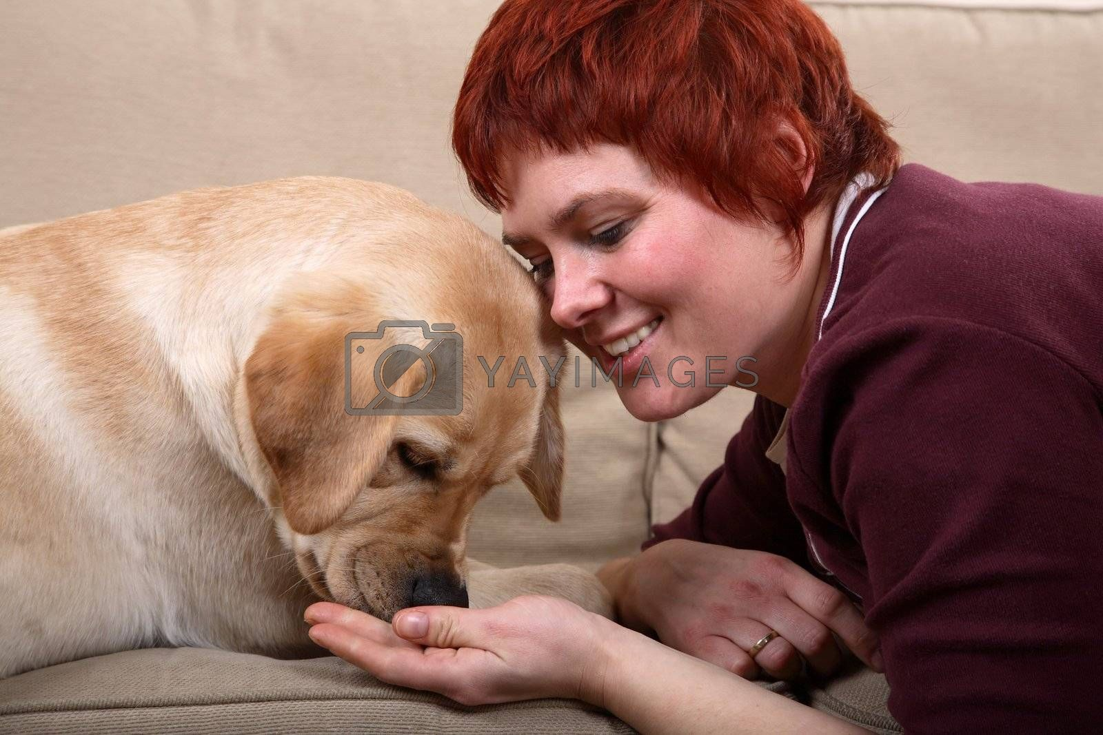 A matured caucasian woman feeding  her young Labrador dog on the sofa