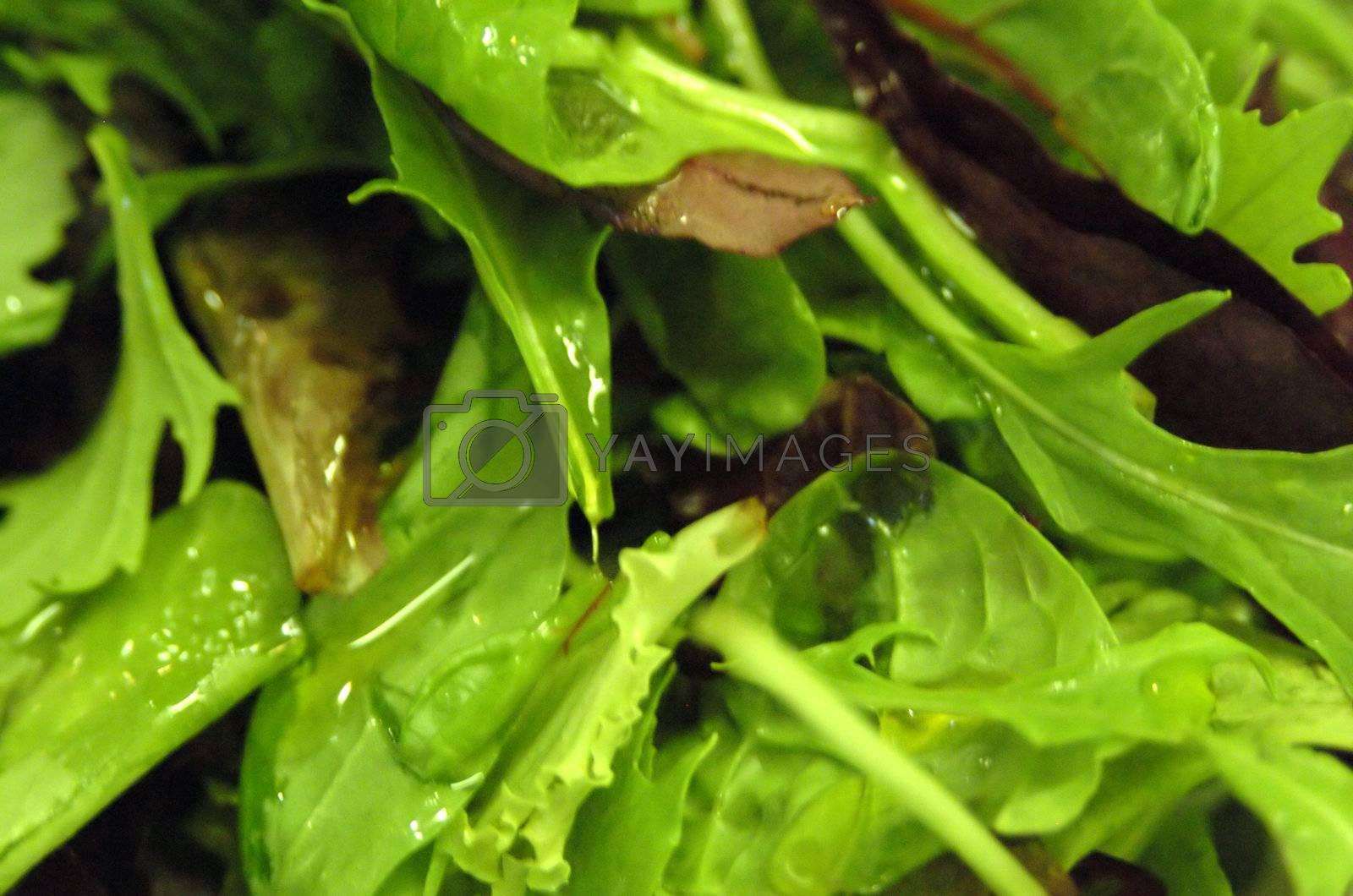 salad 1 by hospitalera