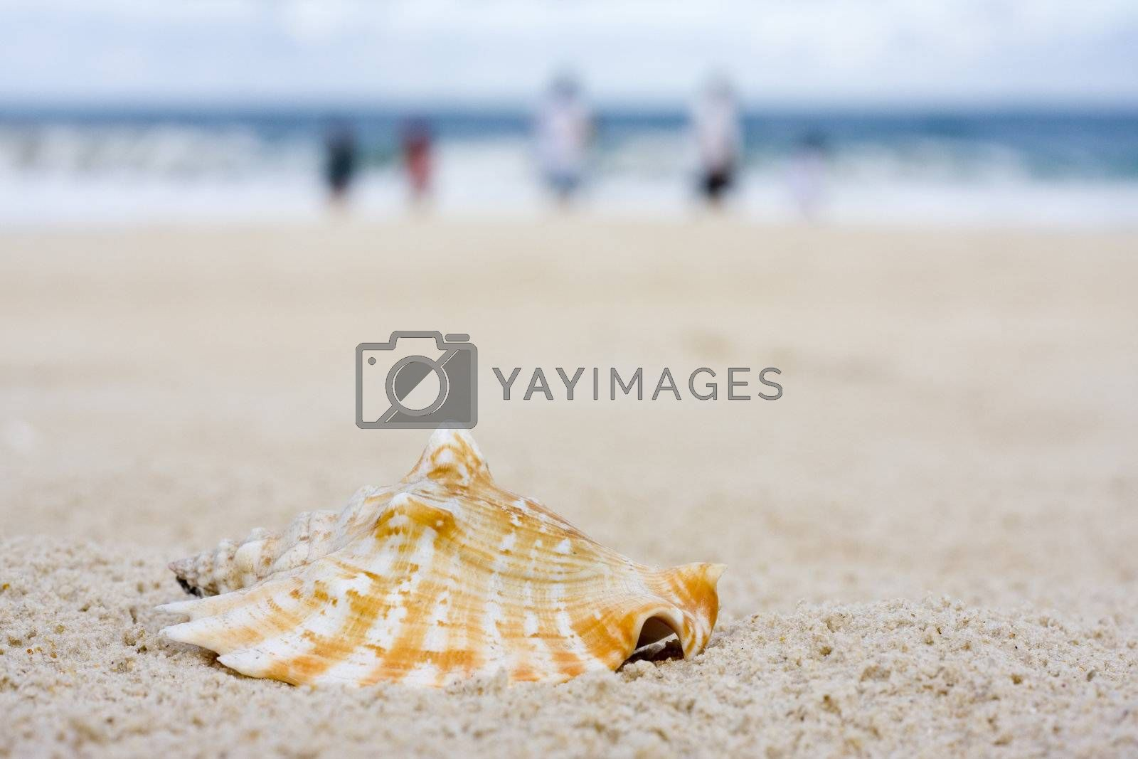 Shell on a beach with blurred people in the background