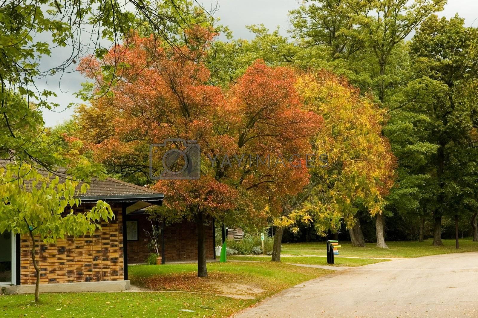 Autumn park  by iribo