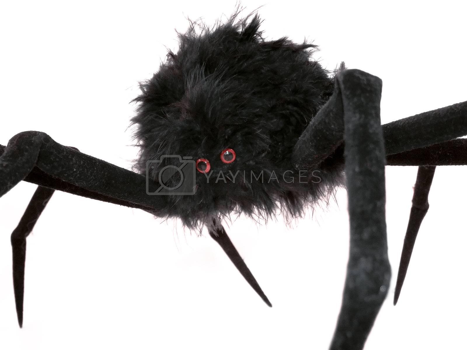 Black spider toy  by PauloResende