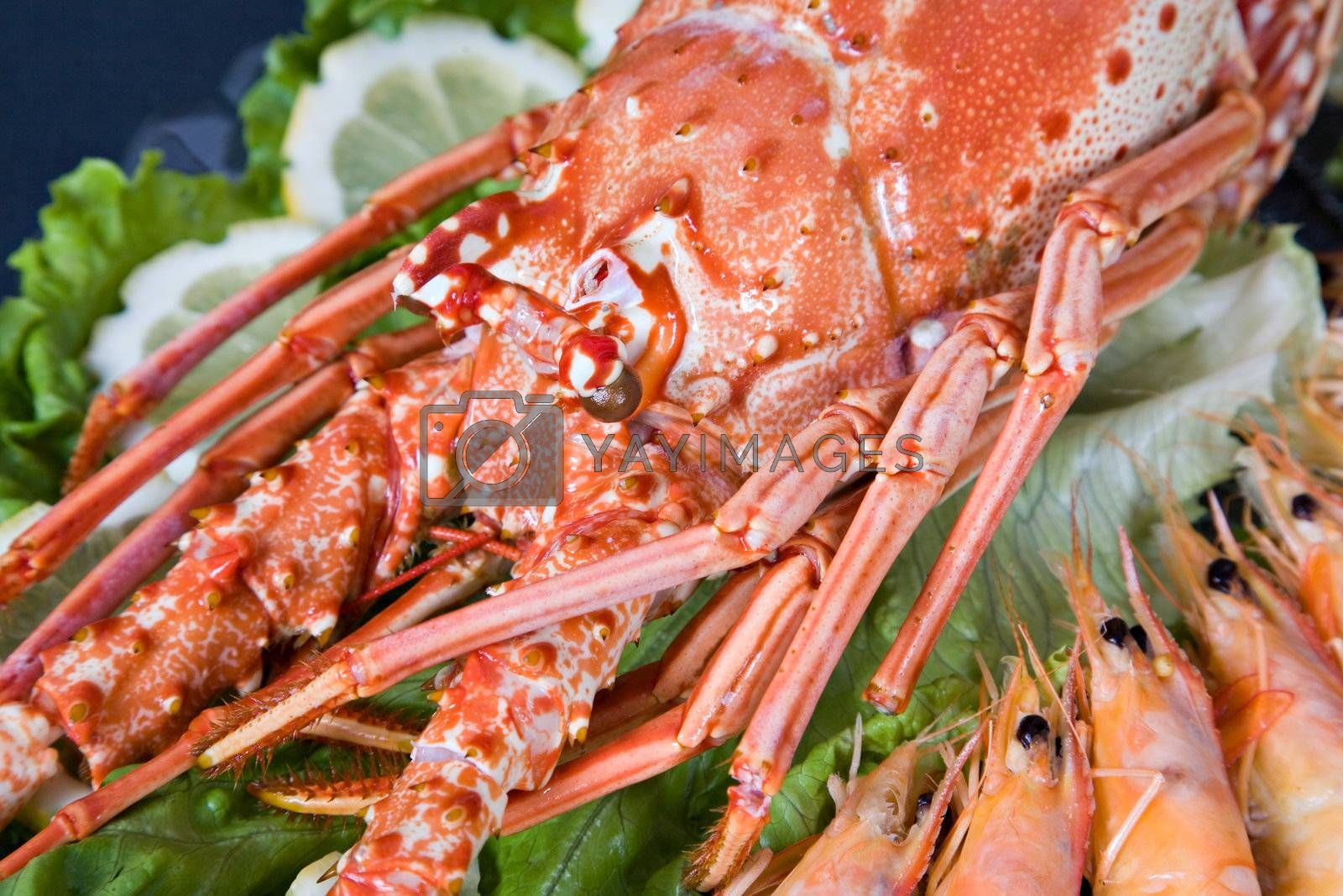 lobster and shrimp by PauloResende