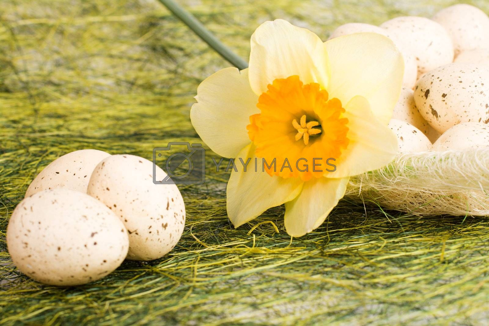 Full basket with decorated speckled easter eggs and daffodil