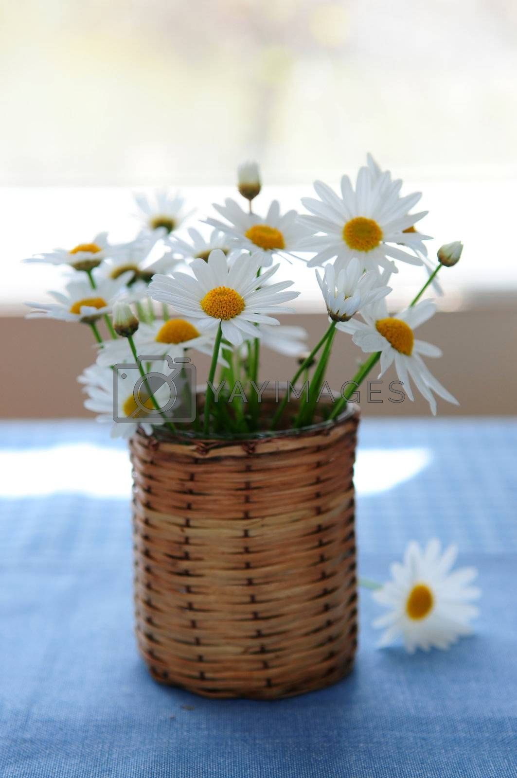 Small bouquet of summer daisies in the morning