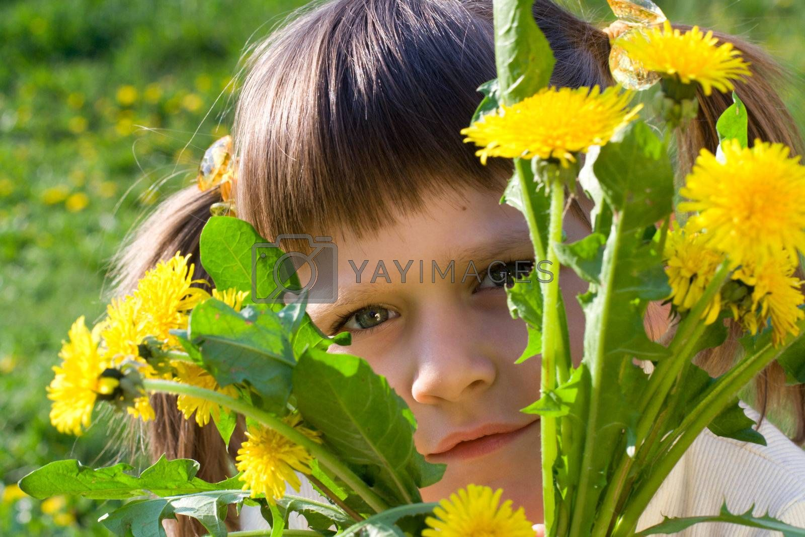 Little girl on the spring meadow peeps out through bunch of dandelions