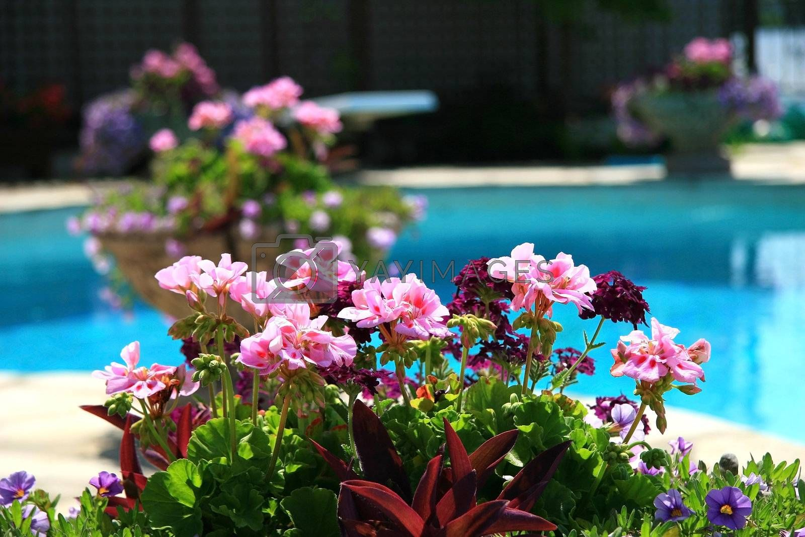 Poolside with beautiful colored flowers