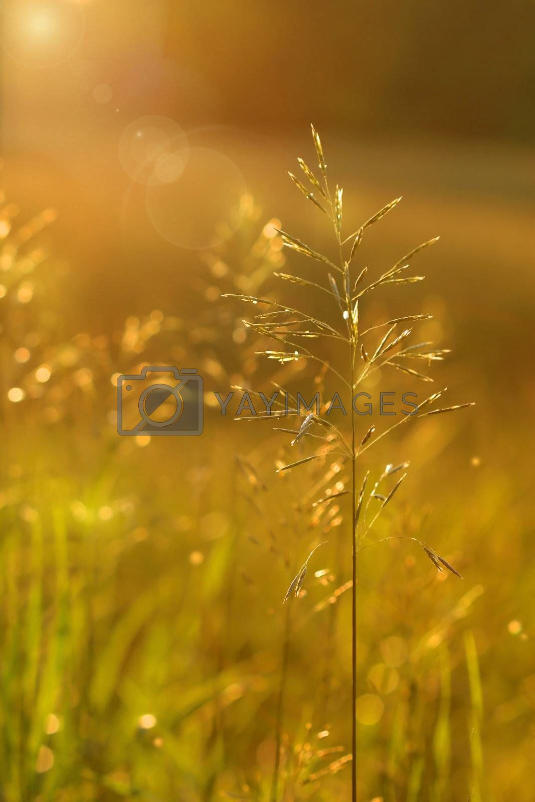 Golden glow in the early evening