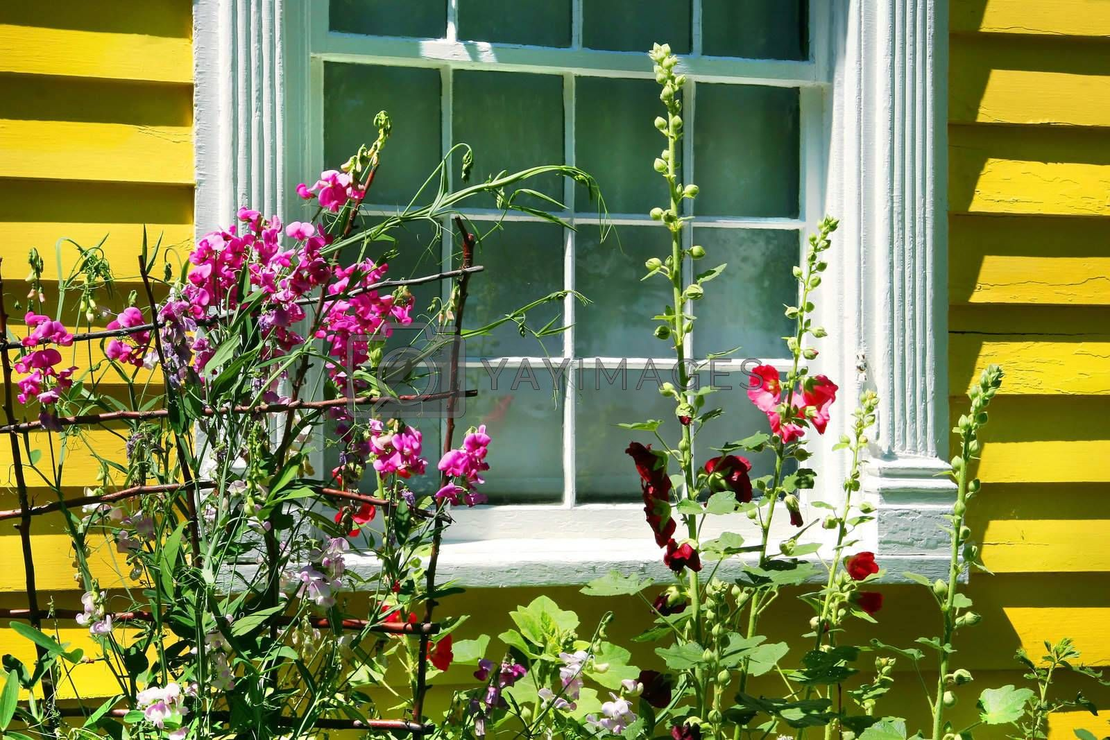 Old cottage with summer garden full of flowers