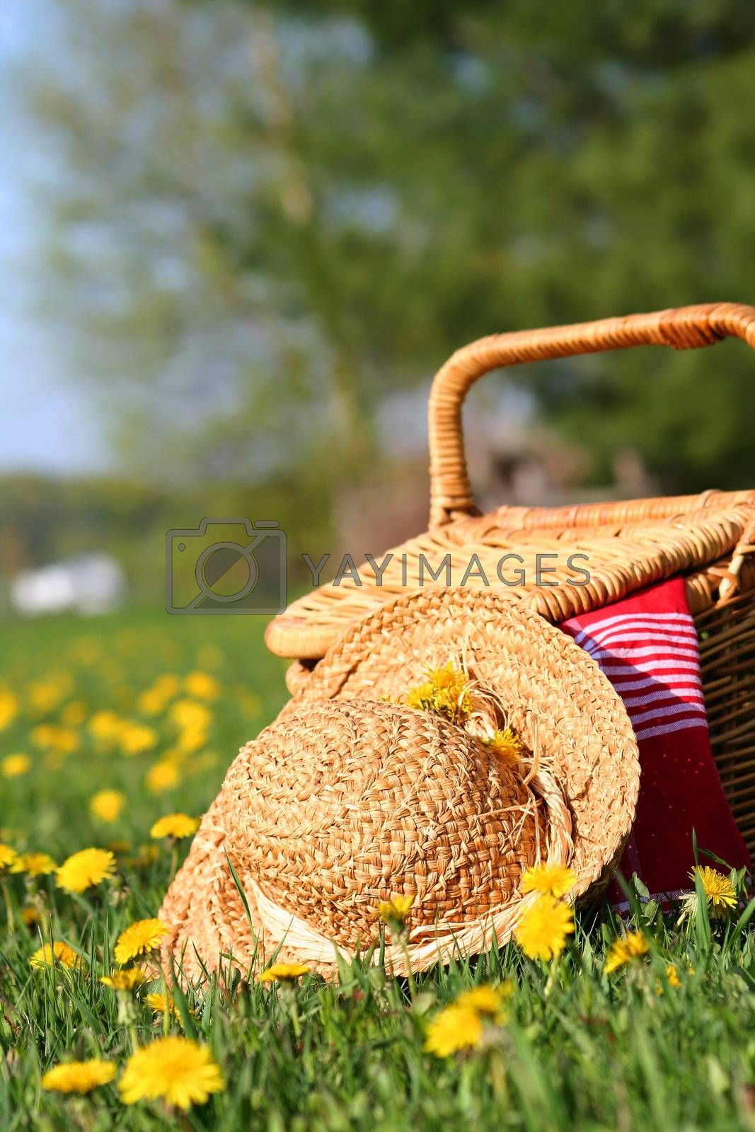 A picnic on the grass with wicker basket and sun hat