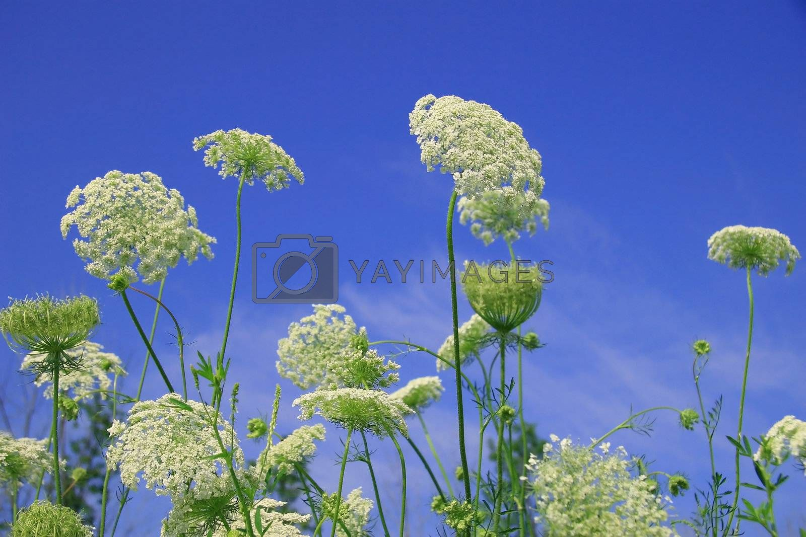 Wild flowers against the blue sky on a sunny day