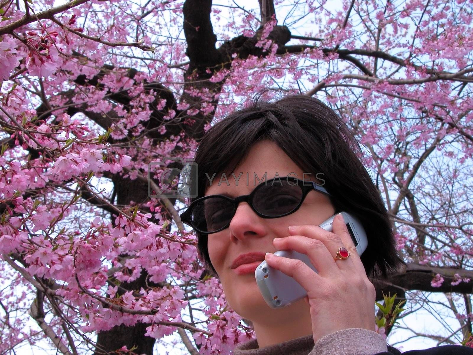 Smiling woman with sunglasse and mobile phone under a cherry blossom tree-metaphor for fresh communication