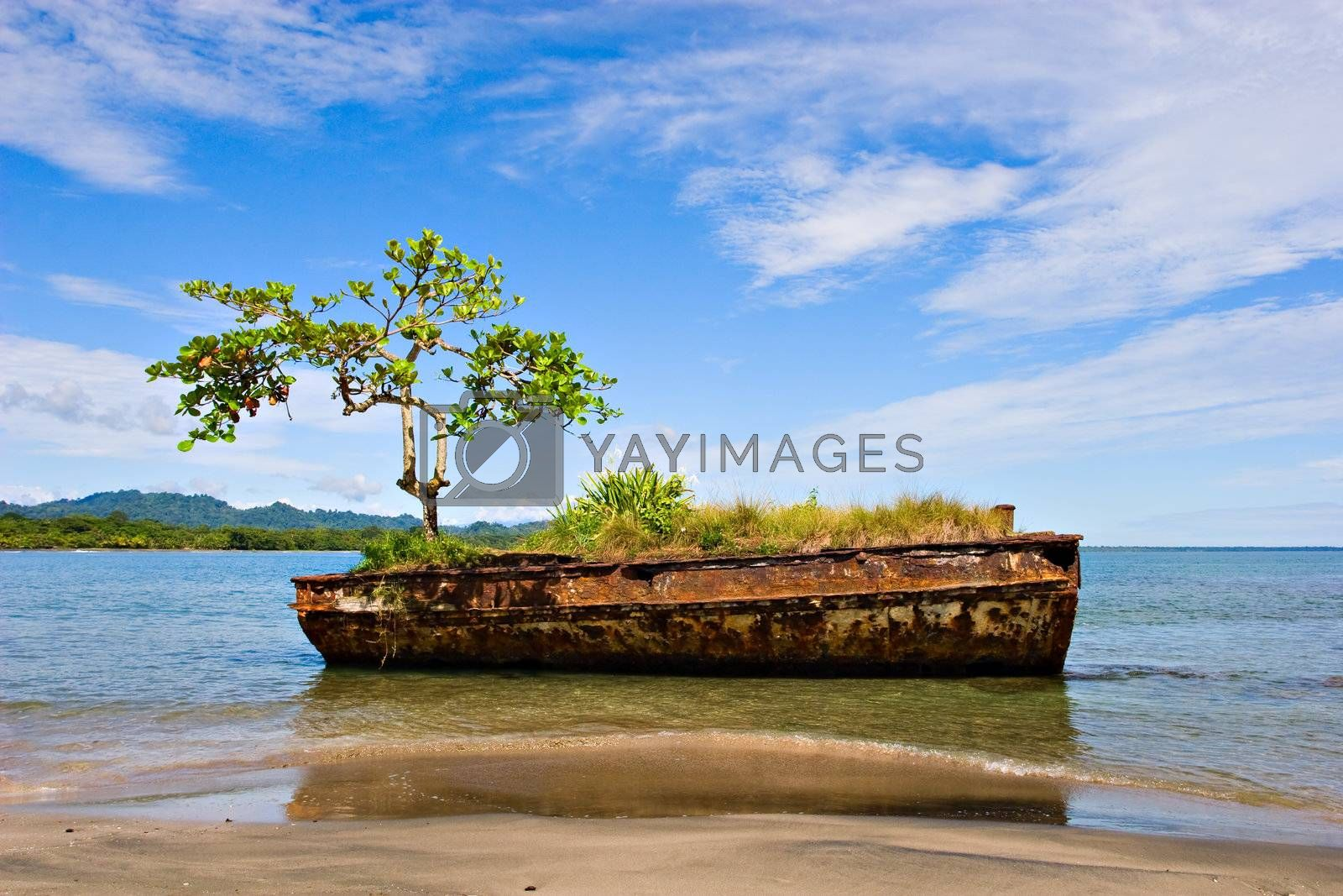 An old rusty vessel with a tree on a beach. Puerto Viejo, Costa Rica.