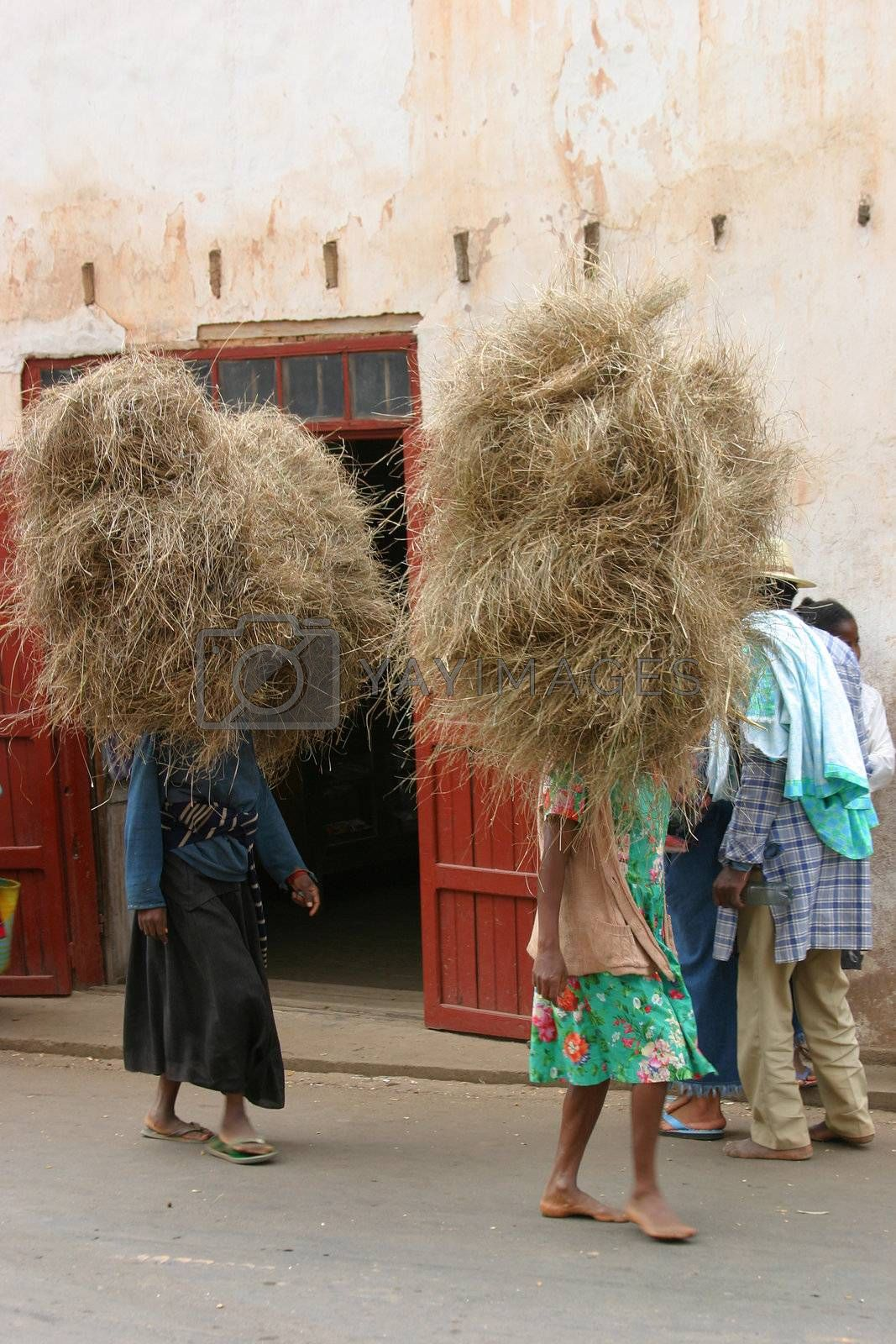 People carrying hay on their heads back home