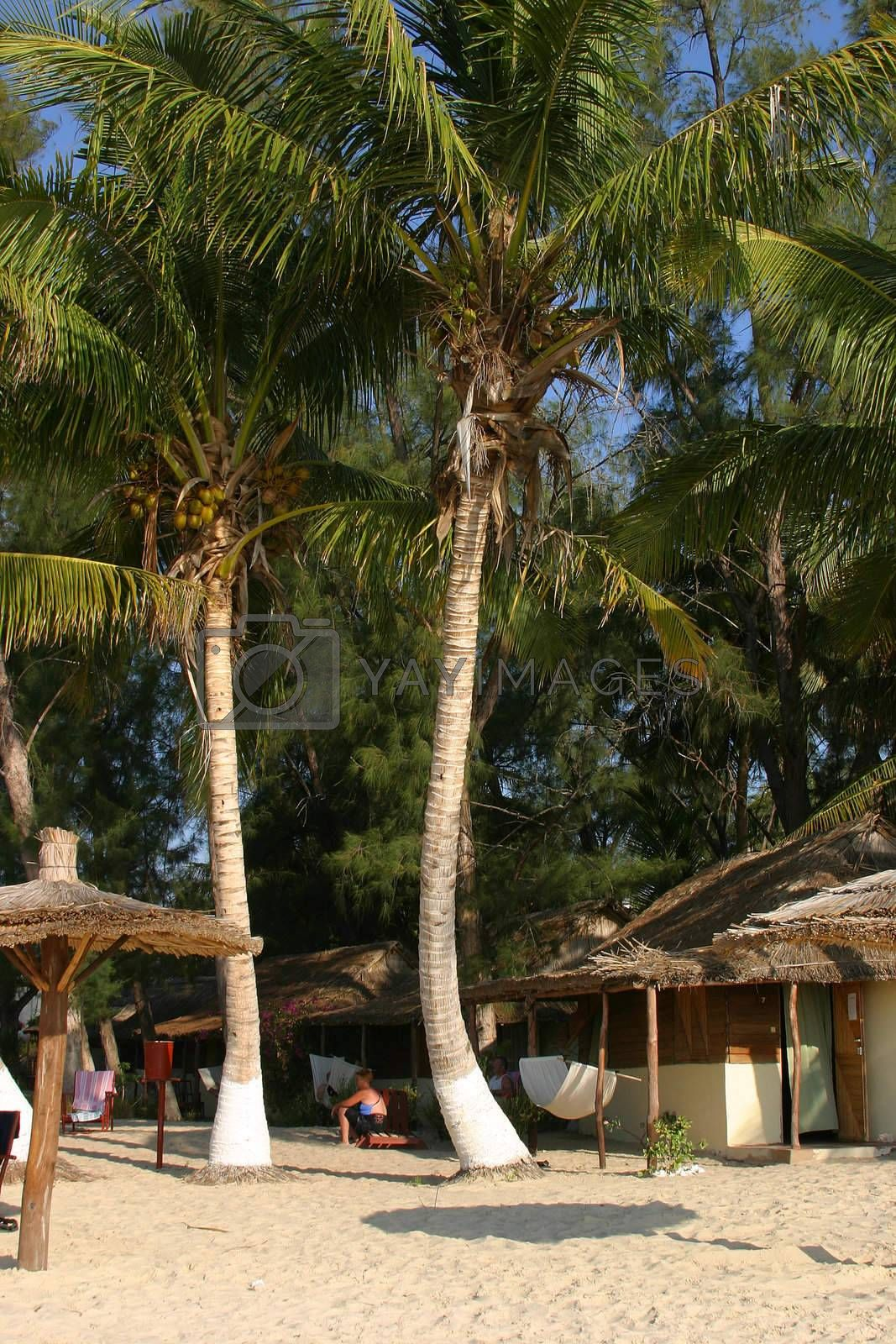 Beautiful palmtrees at the beach in Ifaty, Madagascar