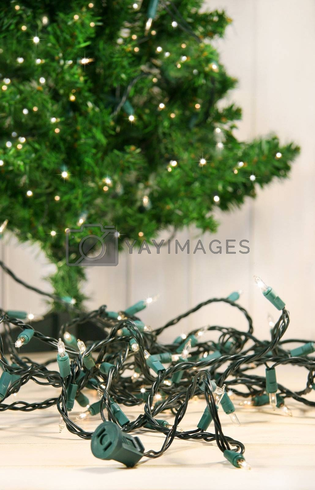 Putting up the tree lights for Christmas