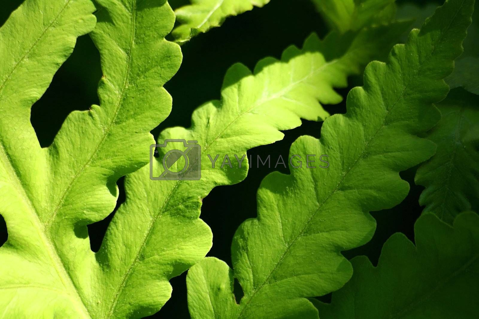 Fern bathed in soft glow of late afternon sunlight