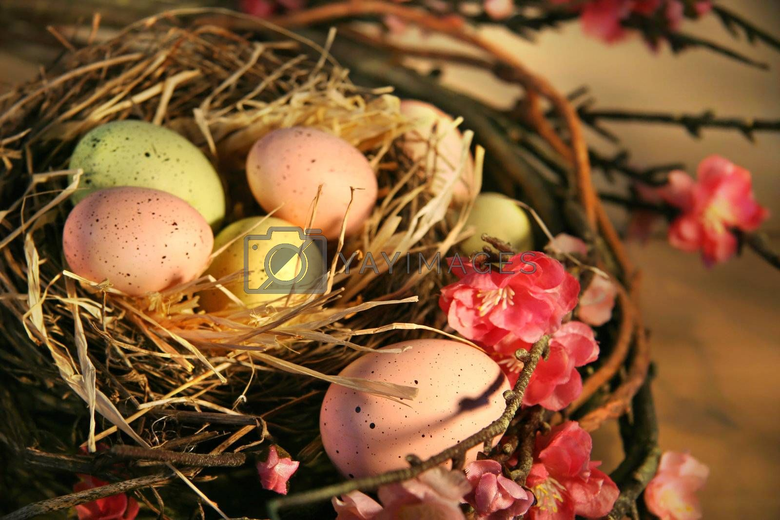 Pink and yellow Easter eggs in a bird nest