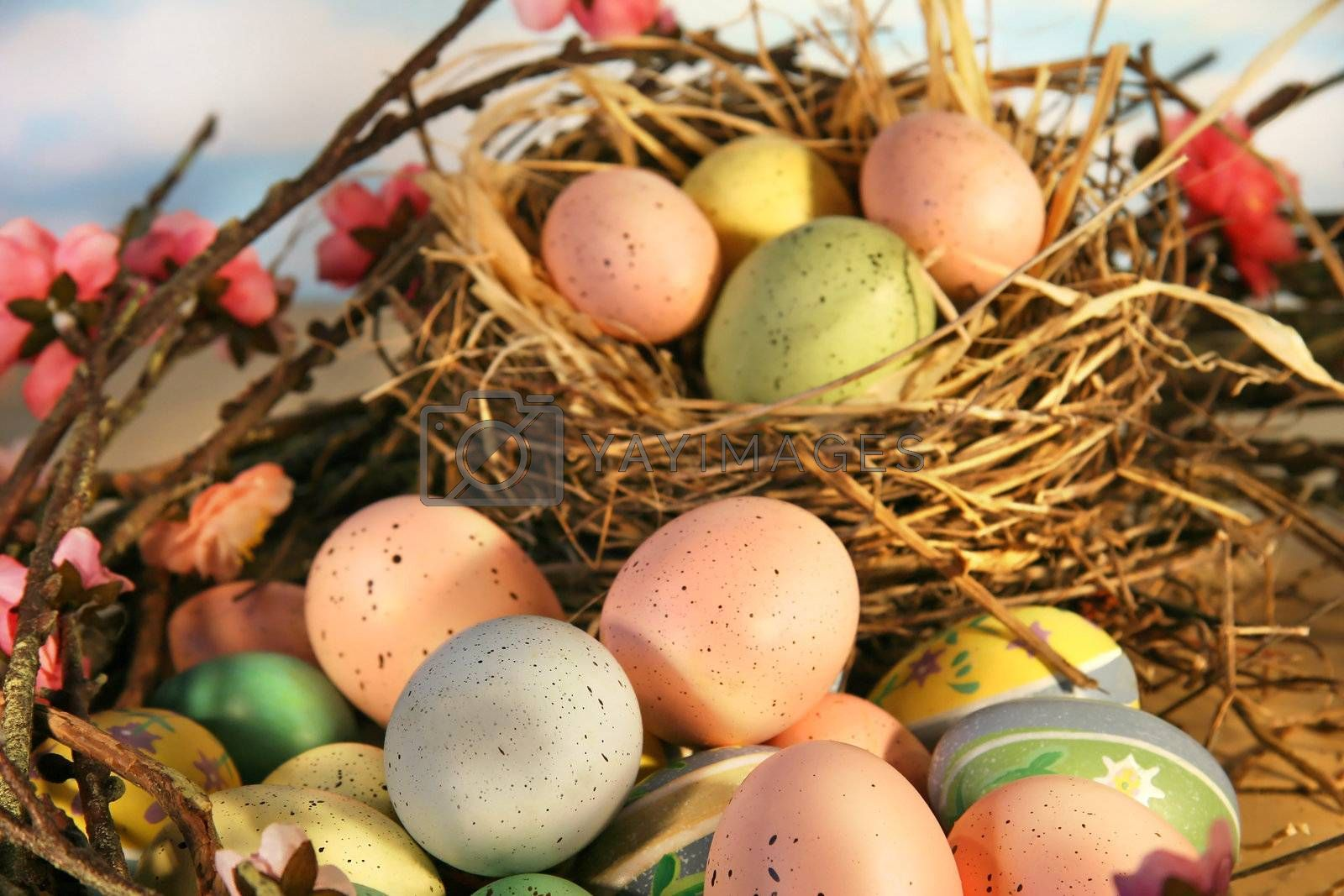 Easter eggs and nest surrounded by apple blossoms