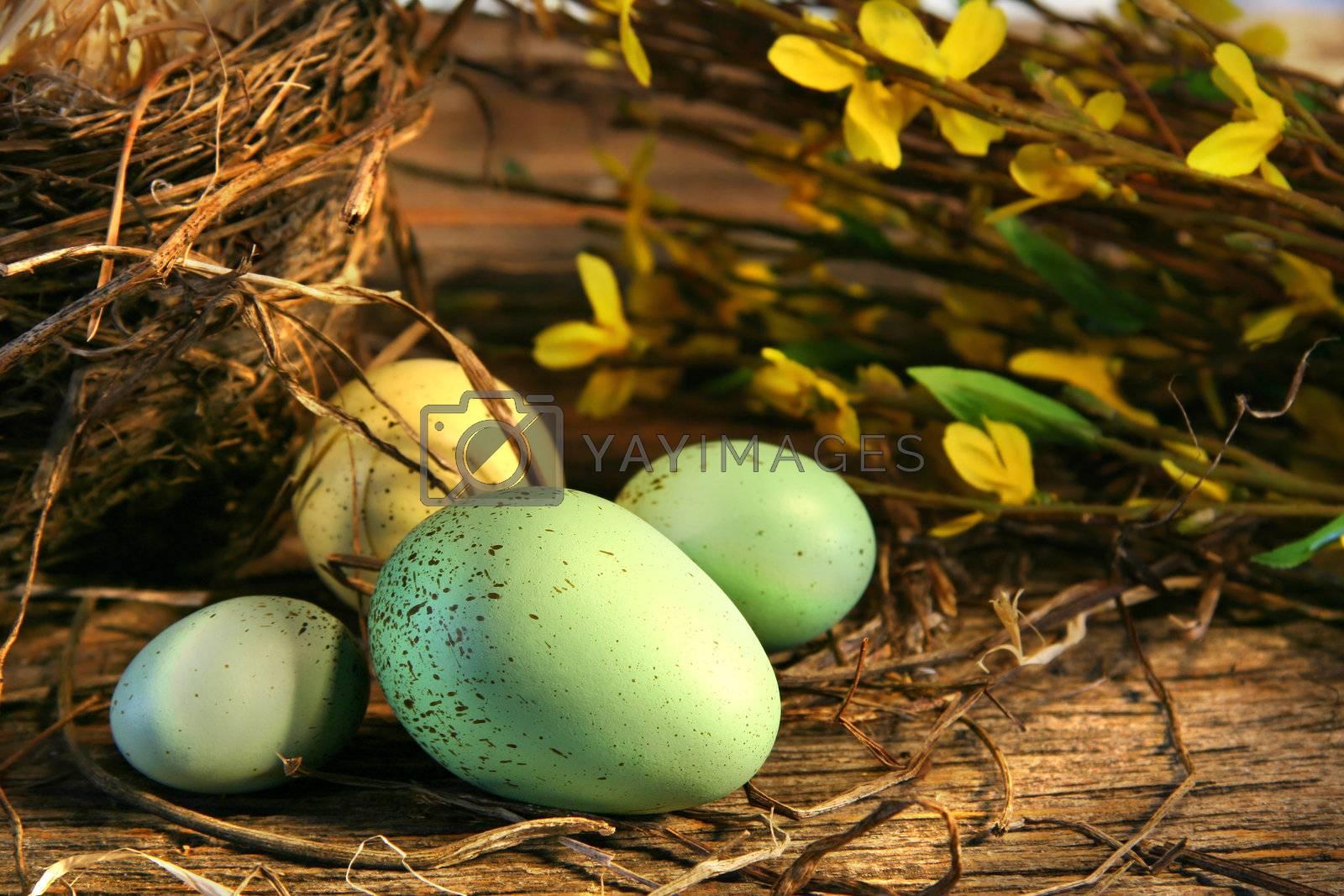 Little Easter eggs lying on old barn wood
